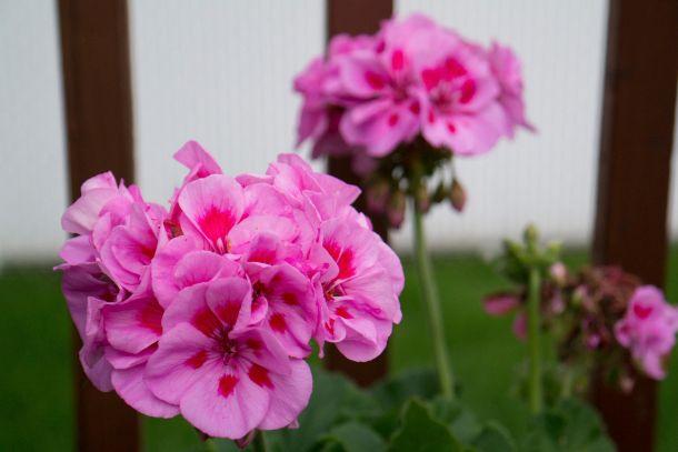 Samsung_NX300_photo_fleurs