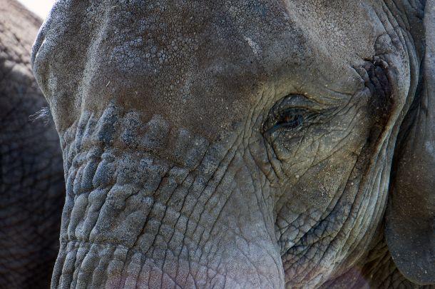 Parc Safari-2950