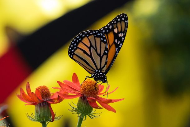 Papillons-03677