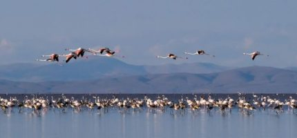 (c) Patrick Pilon - Flamants roses - Turquie